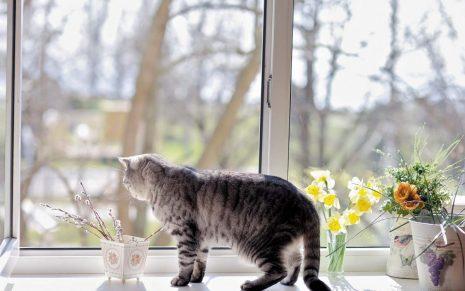 Москитная сетка на окна Антикошка